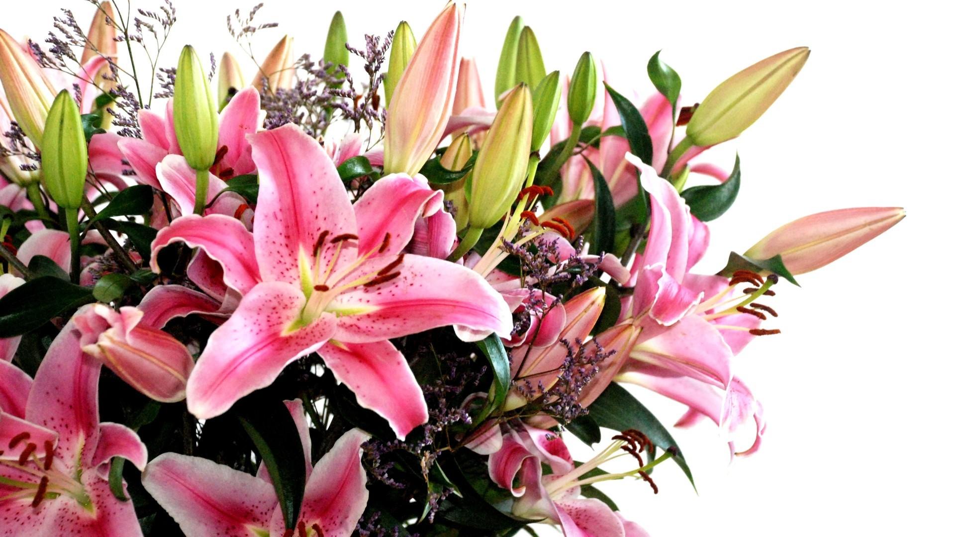 Фото с цветами лилиями