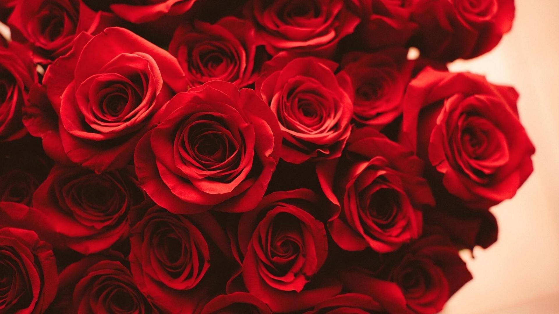 ᐈ красные розы: фотографии и картинки красные розы, скачать фотки.