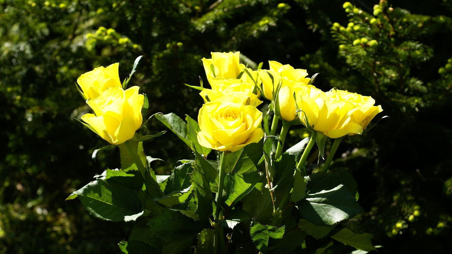 Что означают желтые цветы в подарок 73