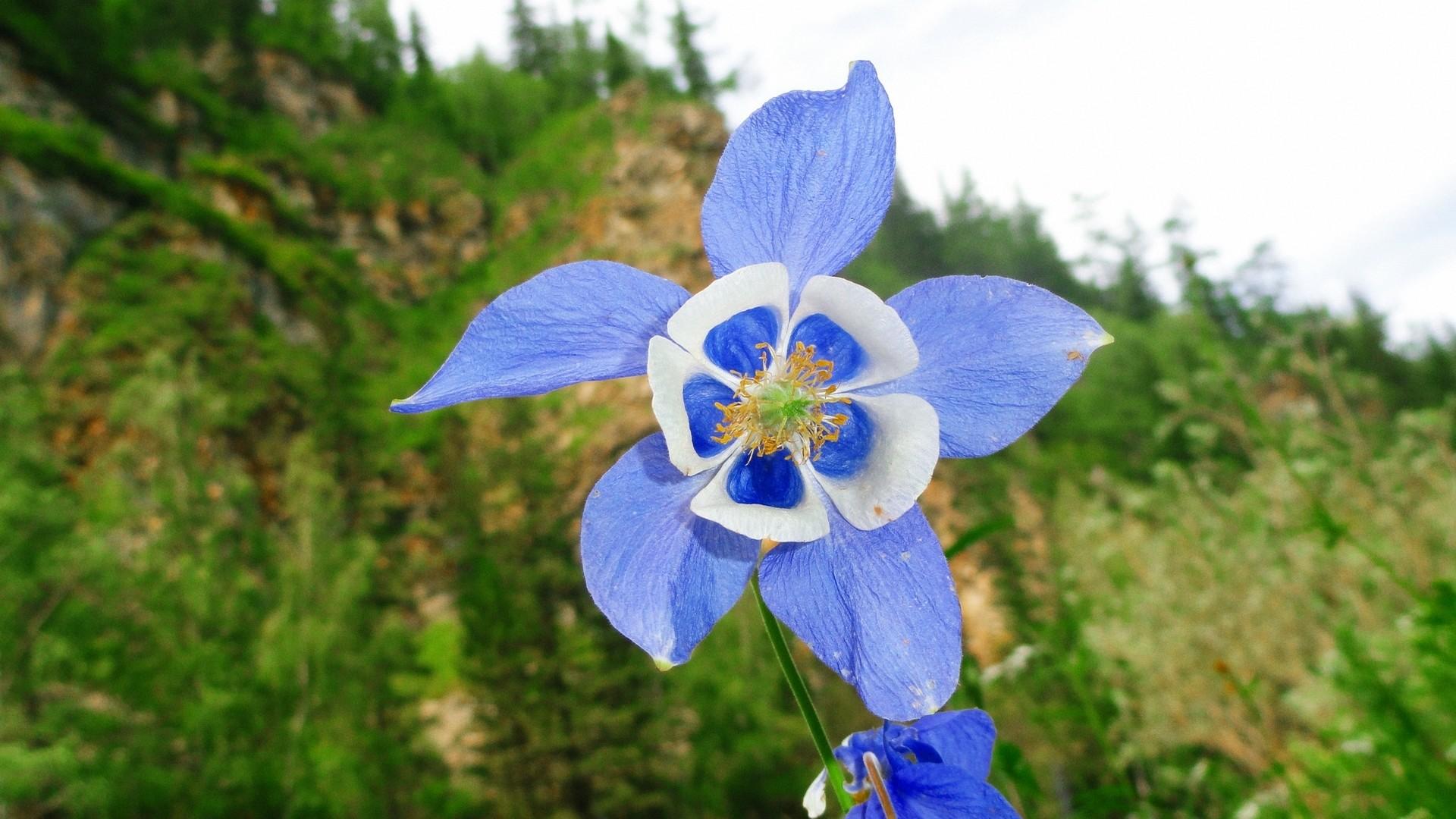 Цветок с синими лепестками
