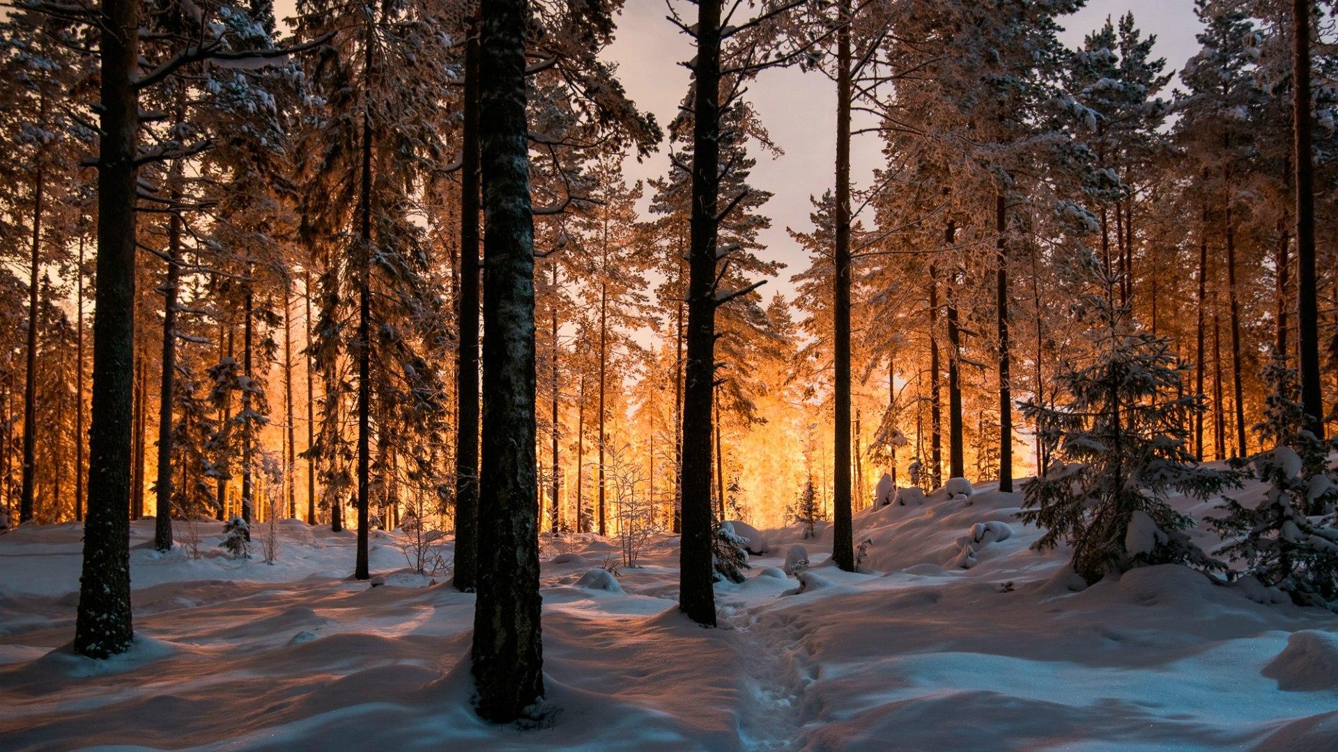 Красивый Зимний Лес На Рабочий Стол