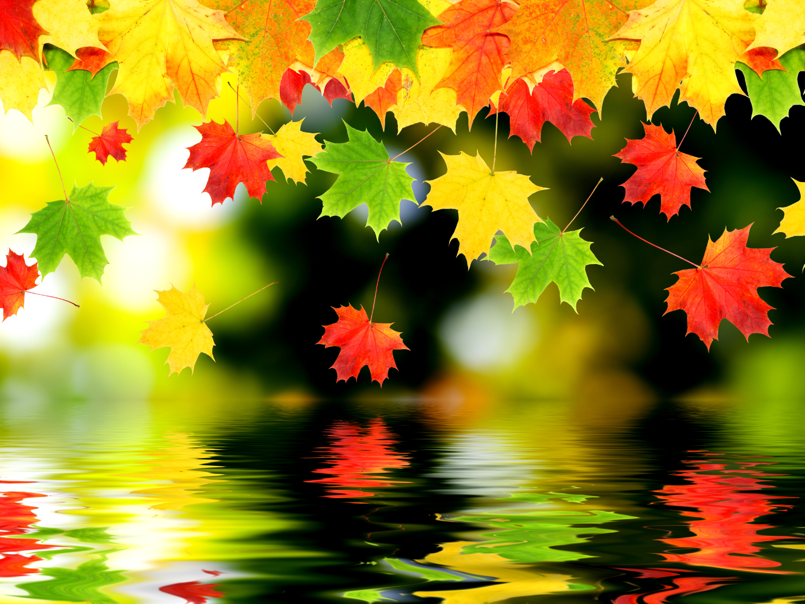 Wallpaper Autumn leaves over water