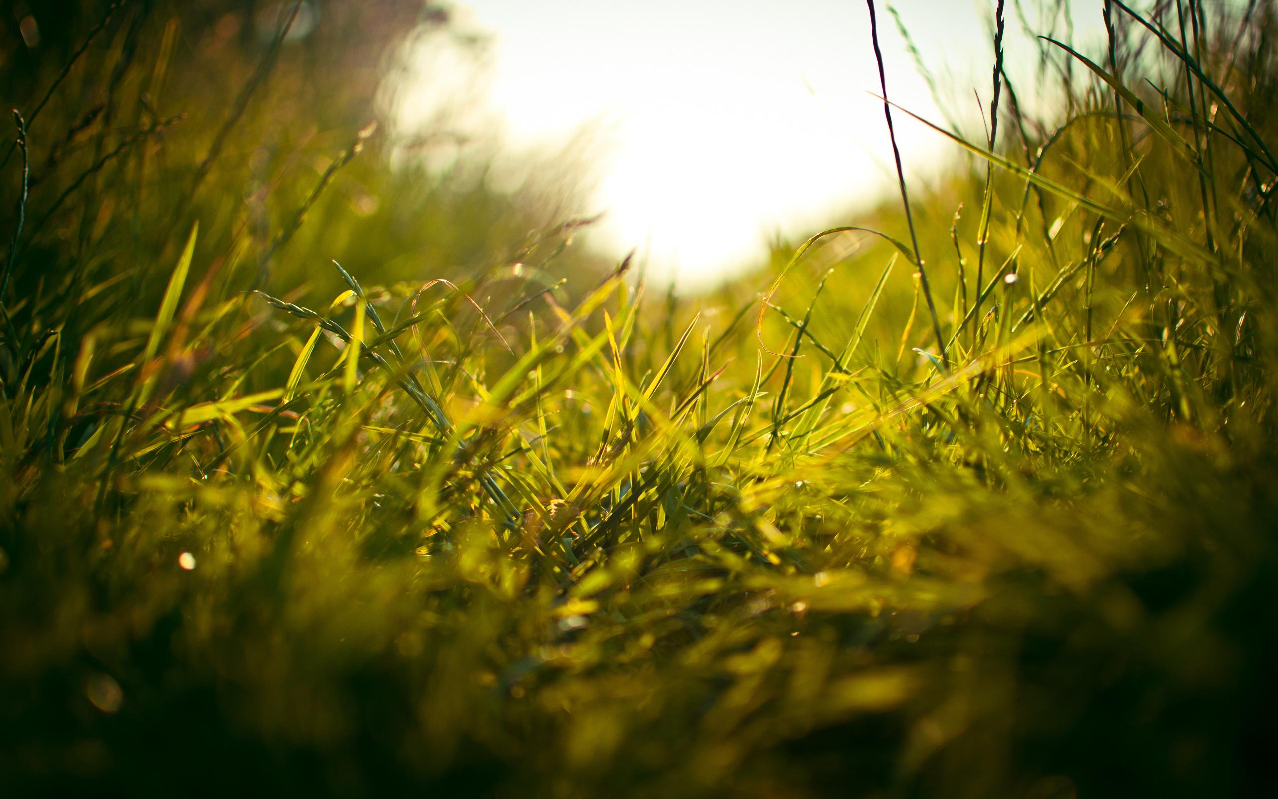 поле травы обои на рабочий стол № 31446 бесплатно