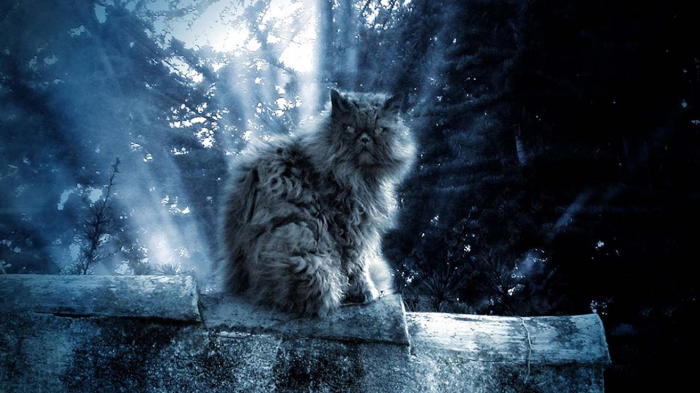 луна кот обои на рабочий стол № 573657 бесплатно