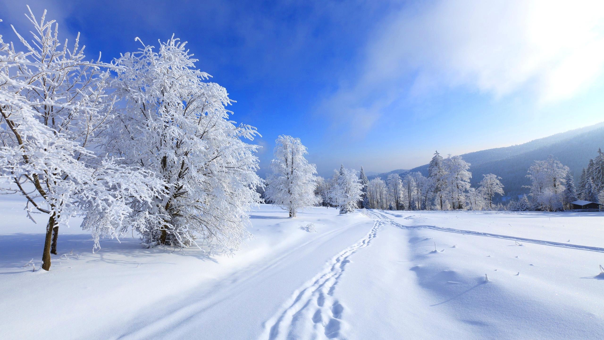 обои зима на рабочий стол пейзаж № 640750 бесплатно