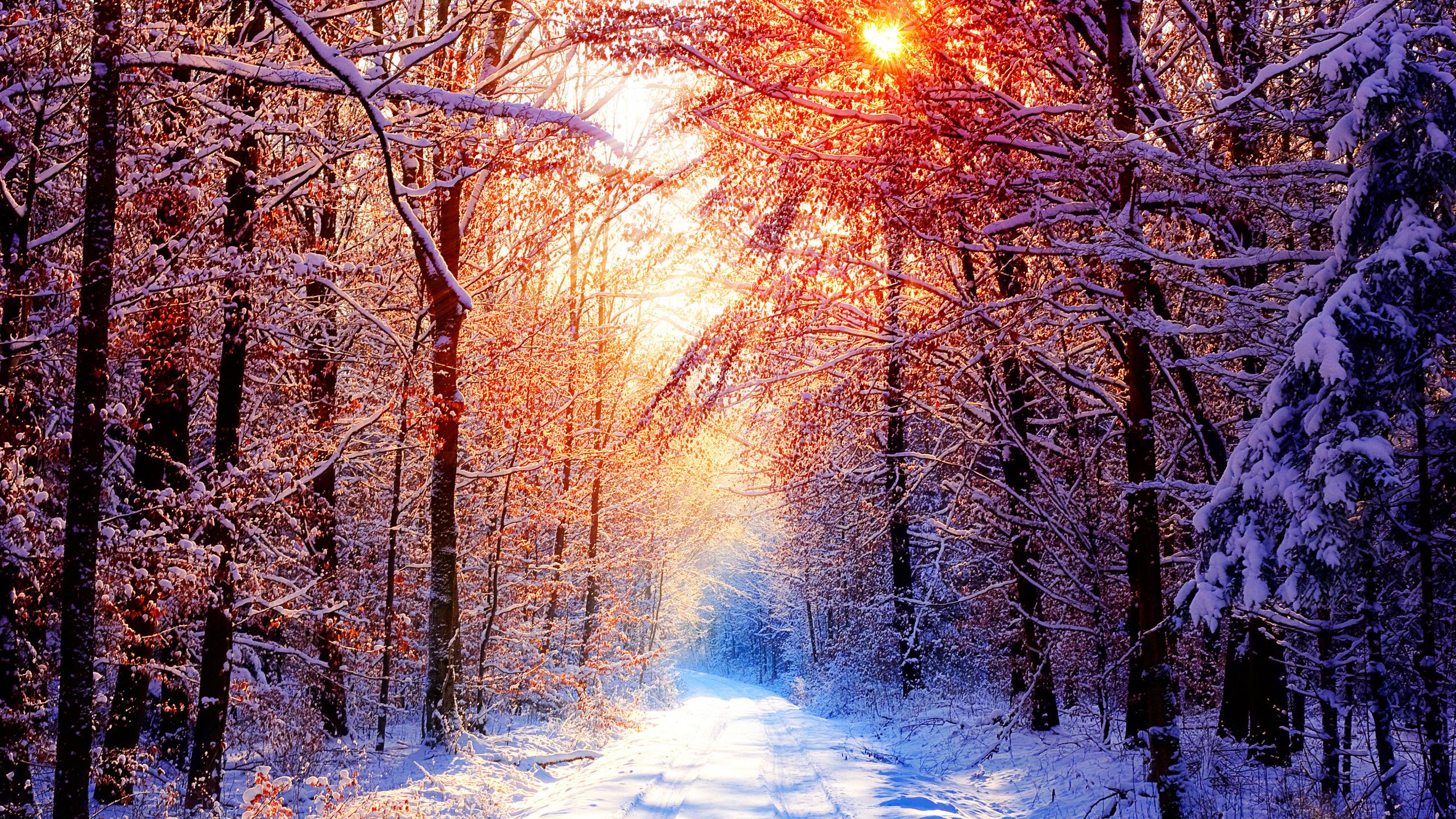 Обои для рабочего стола пейзаж зимы